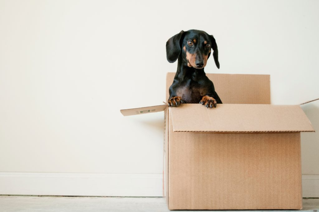 How to help your pet on moving day
