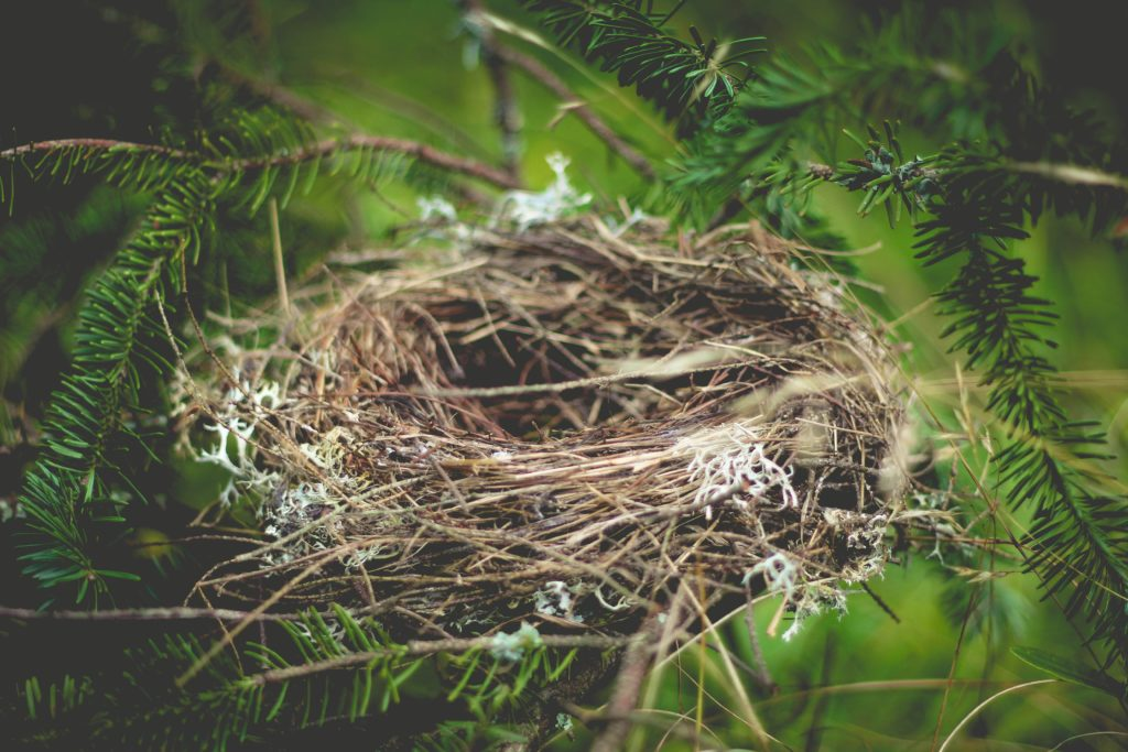 Empty Nest? Some top tips if you're considering downsizing